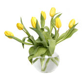 Tulips in a glass vase Stock Image