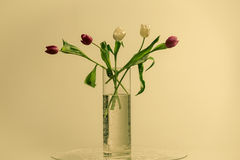 Tulips in  glass vase on a white background Stock Photos
