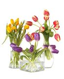 Tulips in glass vases still life. Beautiful display of colorful tulips in three separate glass vases Stock Photos