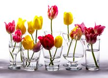 Tulips in glasses Royalty Free Stock Images