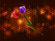 Tulips on glowing metallic honeycomb background Royalty Free Stock Photos