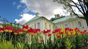 Tulips before the Grand Menshikov Palace. St. Petersburg, Lomonosov, Russia. Tulips before the Grand Menshikov Palace. St Petersburg Lomonosov Russia stock footage