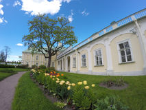Tulips before the Grand Menshikov Palace. St. Petersburg, Lomonosov, Russia Royalty Free Stock Photography