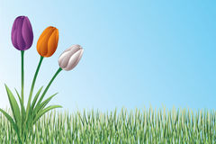 Tulips In Grass Design Stock Images