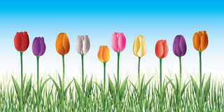 Tulips In Grass Stock Photography