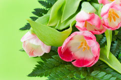 Tulips on green background Stock Photo