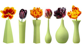 Tulips in green vases on white background Royalty Free Stock Photo