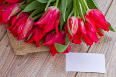 Tulips with greeting card Royalty Free Stock Images