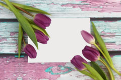 Tulips with greetings card Stock Photos