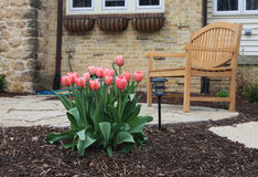 Front Yard Tulips and Bench Stock Photography