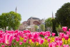 Tulips and Hagia Sophia, Istanbul, Turkey. Tulips and Hagia Sophia in Istanbul, Turkey Stock Photos