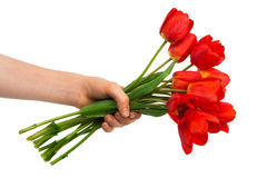 Tulips in a hand Stock Images