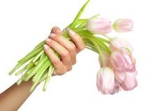 Tulips in hands Stock Photo