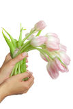 Tulips in hands Royalty Free Stock Image