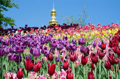 Tulips on a hill and the dome of the church behind them. Royalty Free Stock Photos