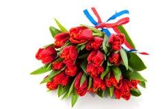 Tulips holandeses Fotos de Stock
