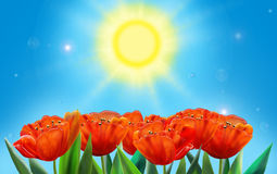 Tulips. Holiday background. Sun day with red tulip on blue sky background, wallpaper digital illustration. For creation greeting card, Celebrate card Royalty Free Stock Photography