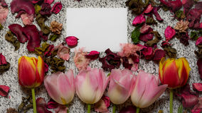 Tulips for holidays. Beautiful tulips bringing some joy and spring spirit in front of grayish background and a card added for free text Royalty Free Stock Photography