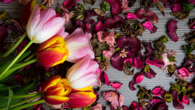 Tulips for holidays. Beautiful tulips bringing some joy and spring spirit in front of grayish wooden background Stock Photo