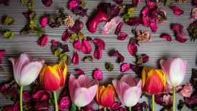 Tulips for holidays. Beautiful tulips bringing some joy and spring spirit in front of grayish wooden background Stock Images