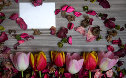 Tulips for holidays. Beautiful tulips bringing some joy and spring spirit in front of grayish wooden background and with a card for free text Stock Photo