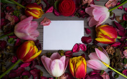 Tulips for holidays. Beautiful tulips bringing some joy and spring spirit in front of grayish wooden background and with a card for free text Royalty Free Stock Image