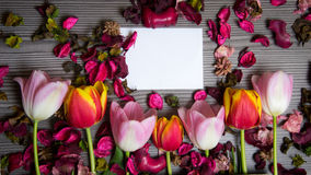 Tulips for holidays. Beautiful tulips bringing some joy and spring spirit in front of grayish wooden background and with a card for free text Royalty Free Stock Photography