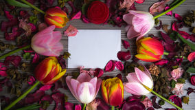 Tulips for holidays. Beautiful tulips bringing some joy and spring spirit in front of grayish wooden background and with a card for free text Stock Image