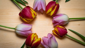 Tulips for holidays. Beautiful tulips bringing some joy and spring spirit in front of wooden background Royalty Free Stock Photography