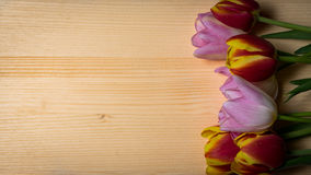 Tulips for holidays. Beautiful tulips bringing some joy and spring spirit in front of wooden background Royalty Free Stock Photos