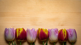 Tulips for holidays. Beautiful tulips bringing some joy and spring spirit in front of wooden background Royalty Free Stock Image