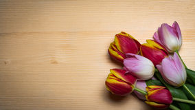 Tulips for holidays. Beautiful tulips bringing some joy and spring spirit in front of wooden background Stock Photography