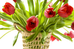 Tulips from Holland Stock Photography