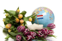 Tulips from Holland Stock Images