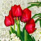 Tulips In Home Stock Photos