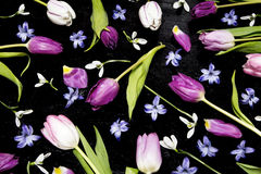 Tulips and a hyacinth Stock Image