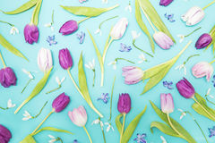 Tulips and a hyacinth Stock Images