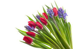 Tulips and Hyacinths Royalty Free Stock Photos