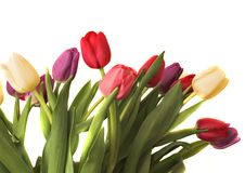 Tulips I. Bouquet of Tulips isolated on white background royalty free stock photography