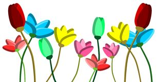 isolated colorful Tulips Stock Photos