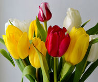 Tulips. Image of the  tilips.red,yellow and white flowes Royalty Free Stock Images