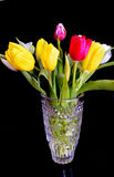 Tulips. Image of the  tilips.red,yellow and white flowes Royalty Free Stock Photography