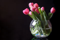 Tulips In The Vase Stock Photos