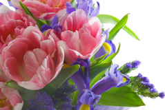 Tulips and iris Royalty Free Stock Image