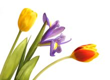 Tulips and iris Royalty Free Stock Images