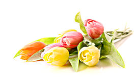 Tulips isolated Royalty Free Stock Photos