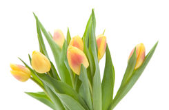 Tulips isolated Stock Photo