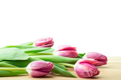 Tulips isolated over white Stock Photo