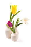 Tulips isolated. Three color tulips isolated on white, standing in vases Stock Images
