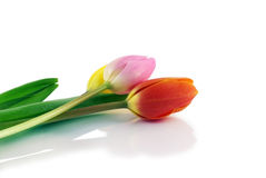 Tulips isolated on white. Yellow, pink and orange tulips isolated on a white background Royalty Free Stock Photo
